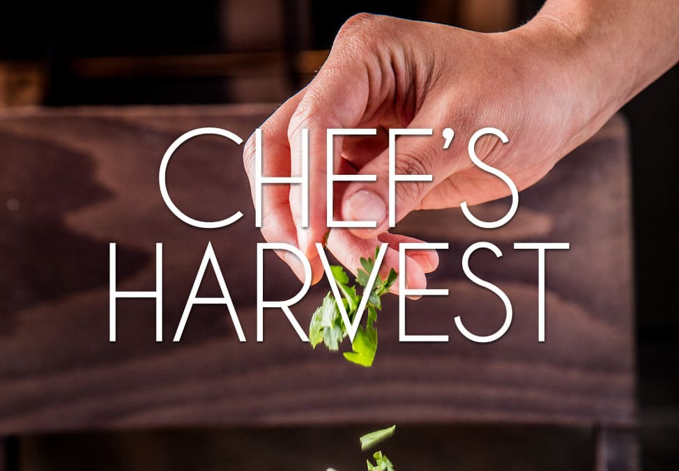 Chef's fresh harvest - $7.50 Meals at Margo's Café